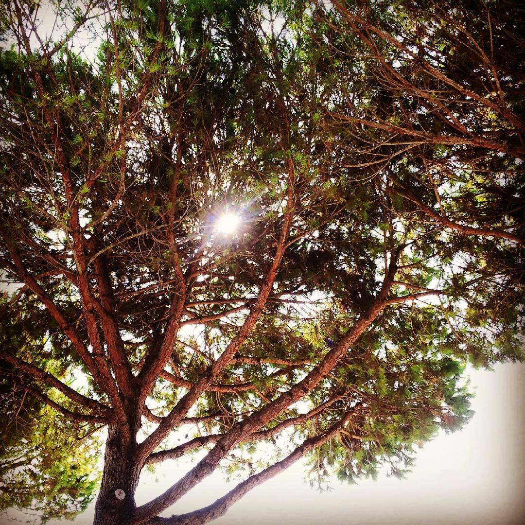 Der Blick durch die Pinien verspricht einen weiteren tollen Sonnentaghellip