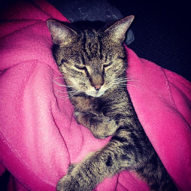 Der Chef des Hauses hält Hof... ;) #katze #cat #faul…