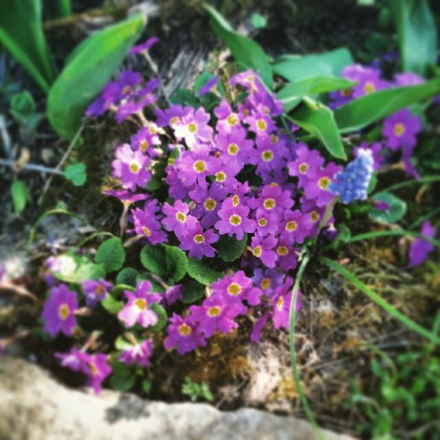 Erste kleine Schätze im Garten ... ♥